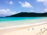 Sea Gulls on a stroll, Playa Flamenco, Culebra, Puerto Rico