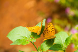 Butterfly Park, Bannerghata National Park, India