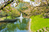 Cherry Blossoms, Fountain, Spring 2015, Chicago