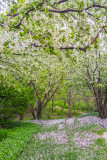 Spring in Palatine, Chicago