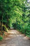 Triberger Falls, Black Forest, Germany