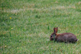 Rabbit, Hofgarten, Munich, Bavaria, Germany