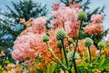 Chicago Botanic Garden, Chicago, Il