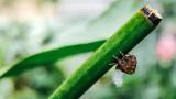 Spider ready to weave, Garden, Home, Palatine, IL, Summer 2015