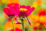 English Walled Garden, Chicago Botanic Garden, Glencoe, IL