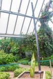 The Corpse Flower, Marie, Chicago Botanic Garden, Glencoe, IL
