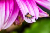 Insect, Chicago Botanic Garden, Glencoe, IL