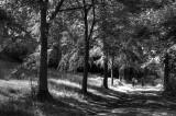 Tortworth lakeside woodsB W copy.jpg