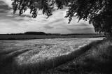 Sunny fields Near Bibury copy.jpg