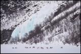 Frozen waterfall and a flock of reindeer near Utsjoki