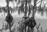Louisiana Landscapes Black and White
