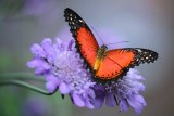 The Tantalizing Beauty of Butterflies