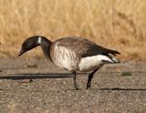 2013 Colorado Bird List
