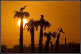 Wetland Sunrise, Florida