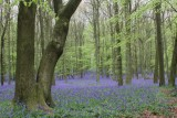 Dockey Wood in April