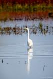 Wetlands reflection