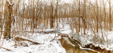 Wintry woods