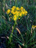yellow 8395