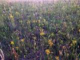 Wild flowers 8391