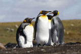 Antarctica Voyage 2014