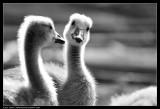 Avian 10