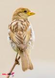 avian12