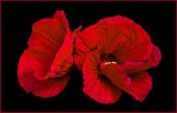 Kentucky Flowers and Fauna