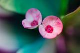 birdsbeesflowers