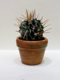 Piante e minipiante .. Plants and miniplants