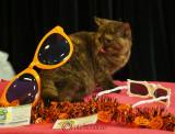 hallowinner-Cat-Show-sofisticat-2014-33.JPG