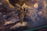 muzeul-antipa-paianjeni-scorpioni-36.JPG