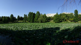 sony-hx90-sweep-panorama-3.JPG