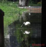 artis-zoo-amsterdam-12.JPG