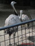 artis-zoo-amsterdam-18.JPG
