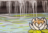 Icicles & Water Lilies