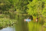 Kayaking Mill Creek