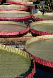 Royal Water Platters