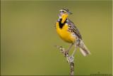 marsh_and_shorebirds