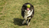 ..here comes the ball...