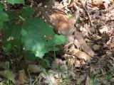 Baby deer 1