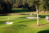 Deer cavorting on golf course