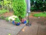 Annie's backyard