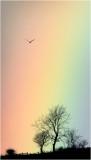Rainbow Kite!