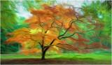 Colours of Autumn