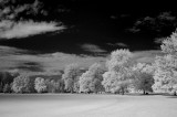 infrared field.jpg