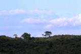 40718_112_Kilimanjaro.JPG