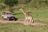 40718_116_ArushaNP-Giraffe.JPG