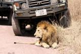 40720_152_Lion.JPG
