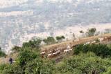 40720_158_Ngorongoro.JPG