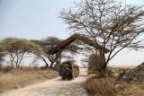 40721_130_Serengeti-Entrance.JPG